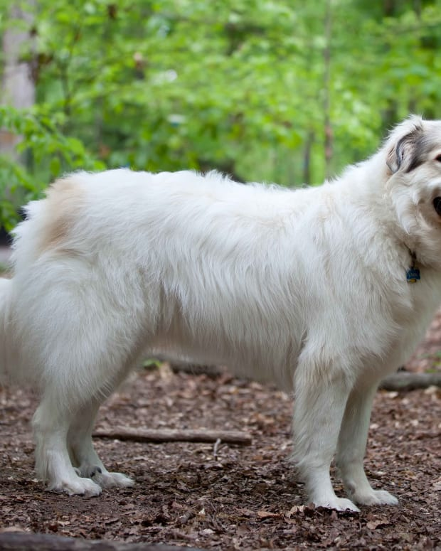 five-dog-breeds-for-farm-work