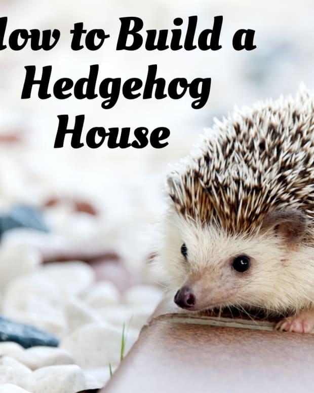 how-to-build-a-proper-house-for-a-hedgehog
