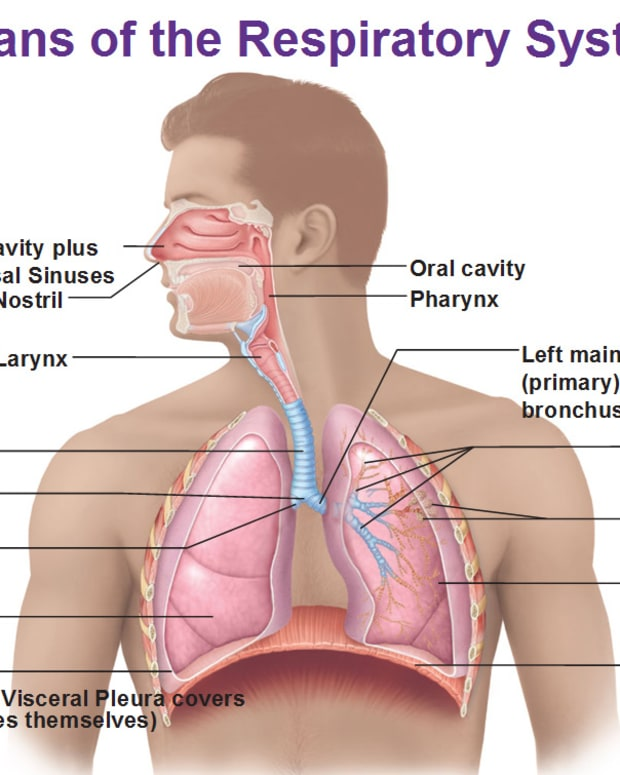 pulmonary-mechanics