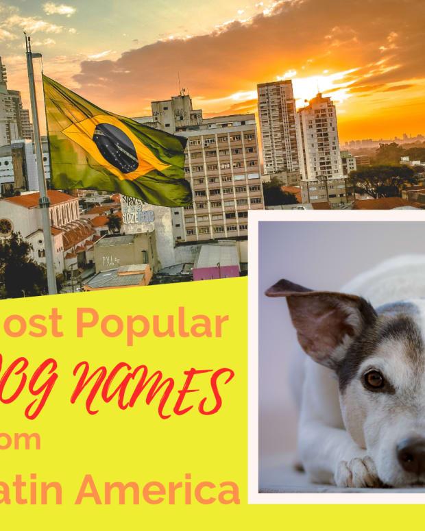 latin-dog-names-for-a-fila-brasileiro