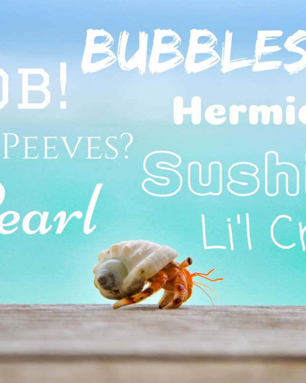 hermit-crab-names