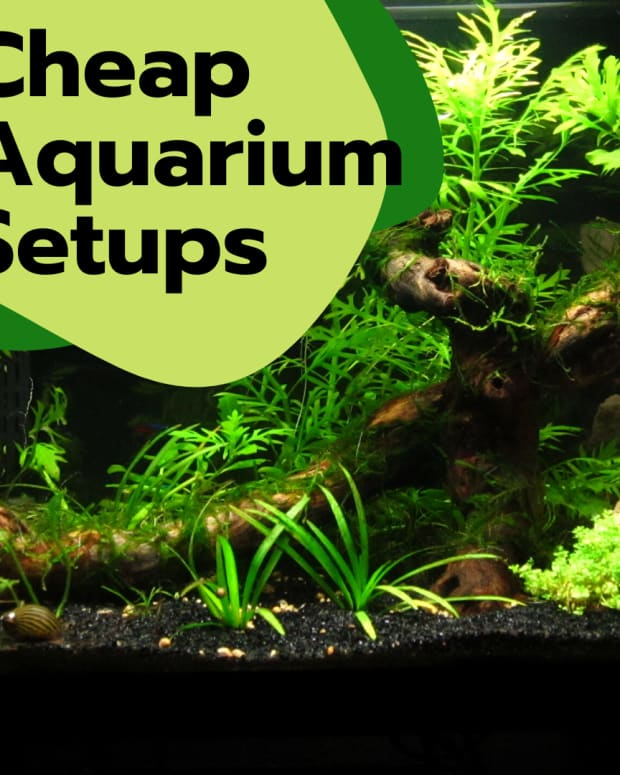 cheap-alternatives-to-an-aquarium-setup