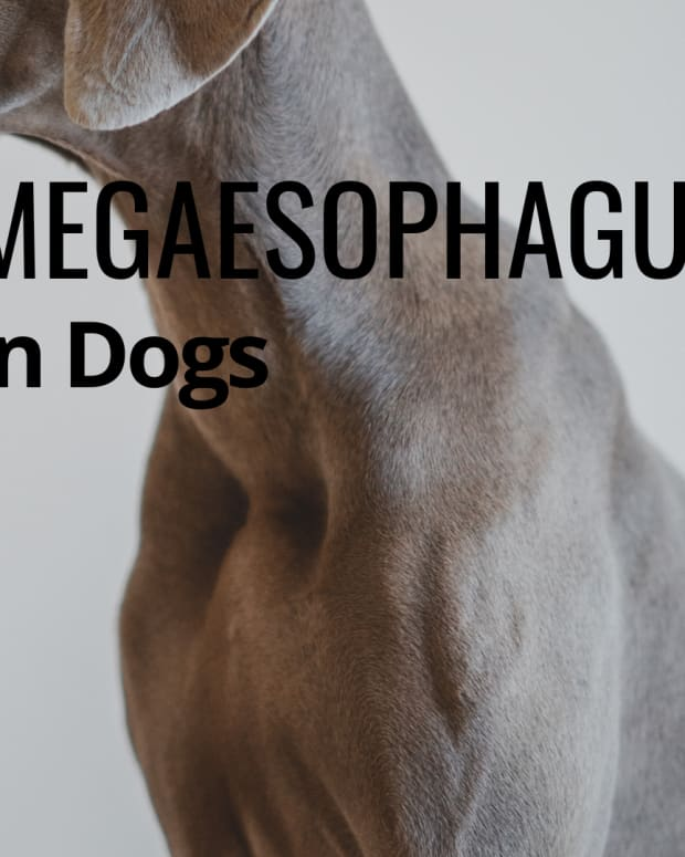dog-food-for-megaesophagus