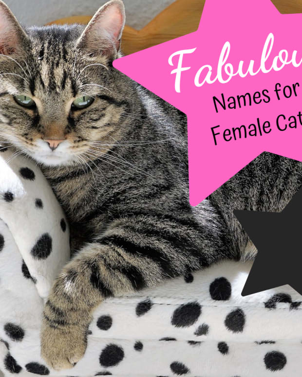 kitty-names-40-fabulous-names-for-female-cats