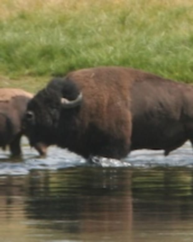 top-ten-wildlife-viewing-and-photography-locations