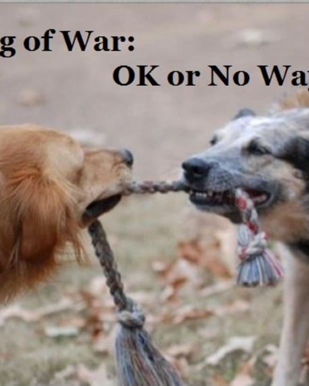 is-playing-tug-of-war-with-a-dog-ok