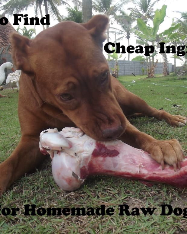 raw-dog-food-cheap