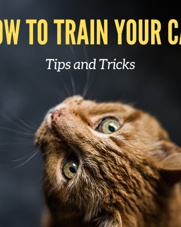 how-to-train-your-cat-to-do-tricks