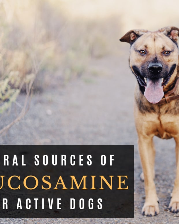 natural-glucosamine-for-dogs