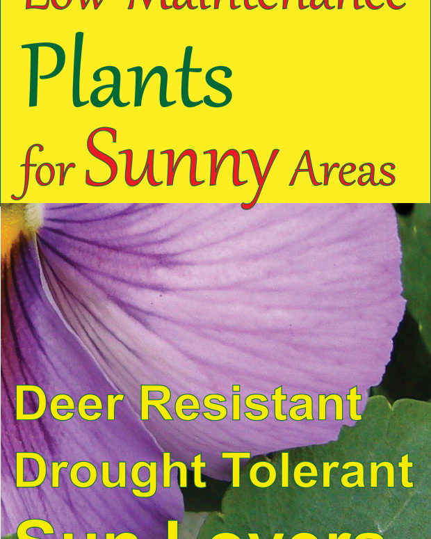 low-maintenance-plants-for-sunny-areas
