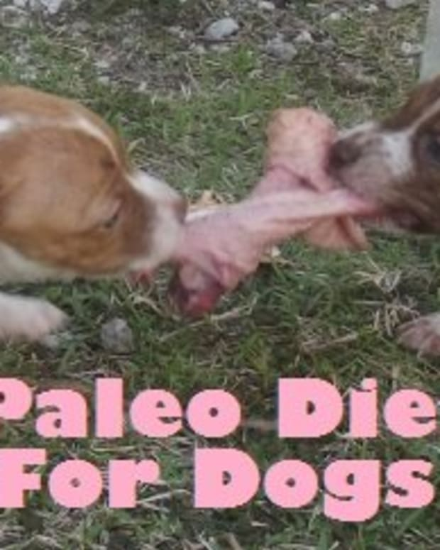 paleo-diet-dog