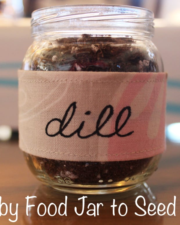 diy-baby-food-jar-to-seed-starter