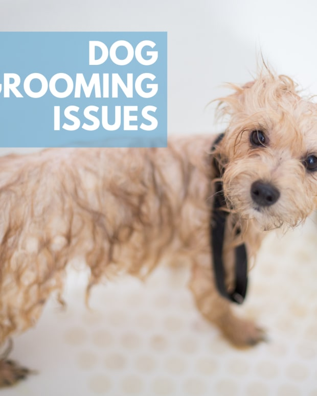 common-dog-grooming-issues