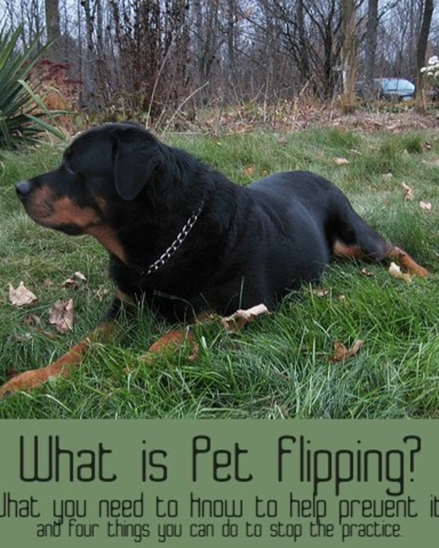 what-is-pet-flipping