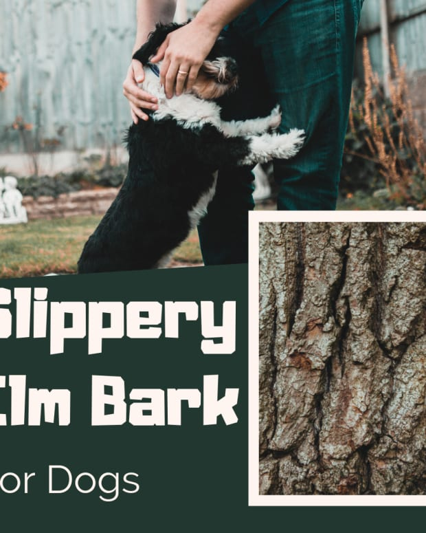 slippery-elm-bark-for-dog-diarrhea-and-upset-stomach