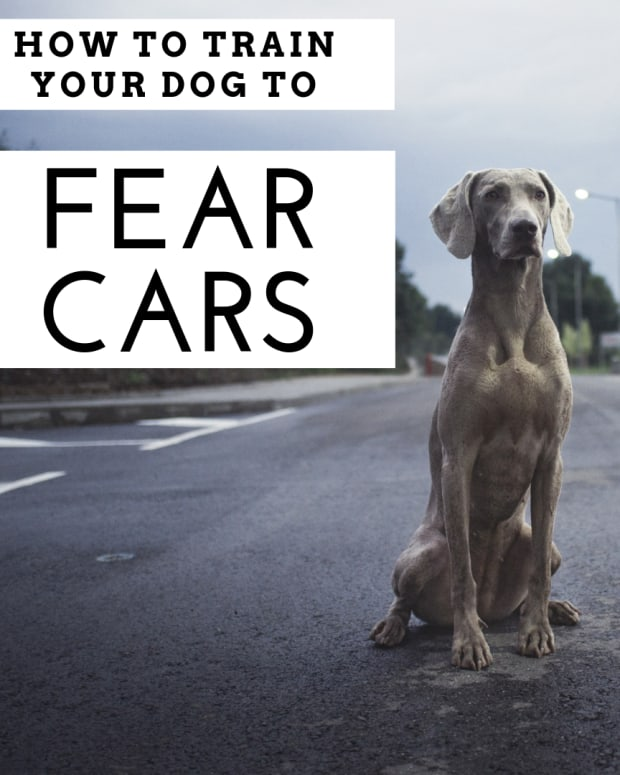 road-sense-dog