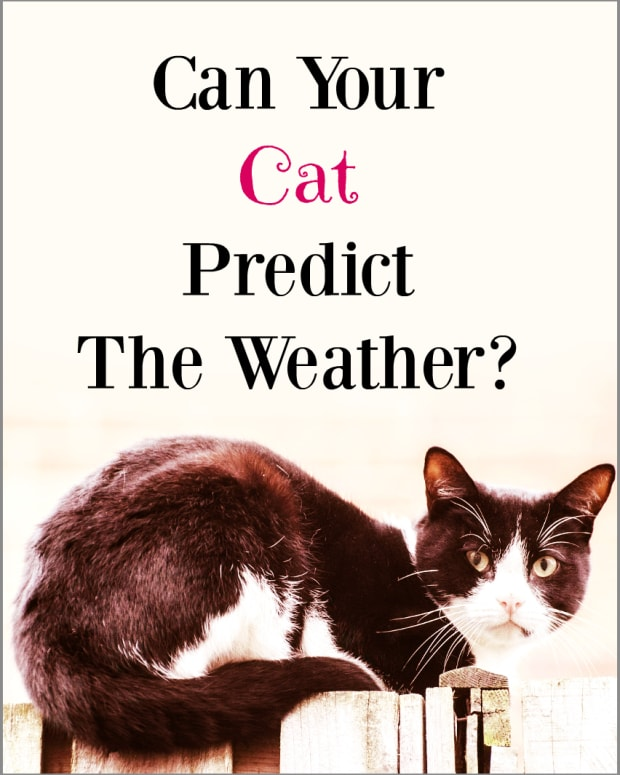 can-your-cat-predict-the-weather