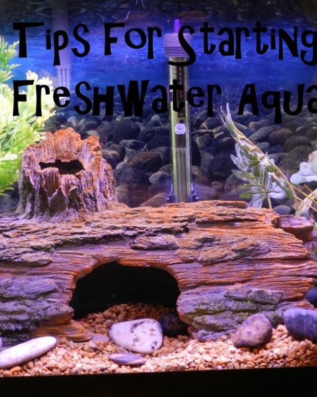 tips-for-starting-a-new-aquarium-beyond-the-setup-guide