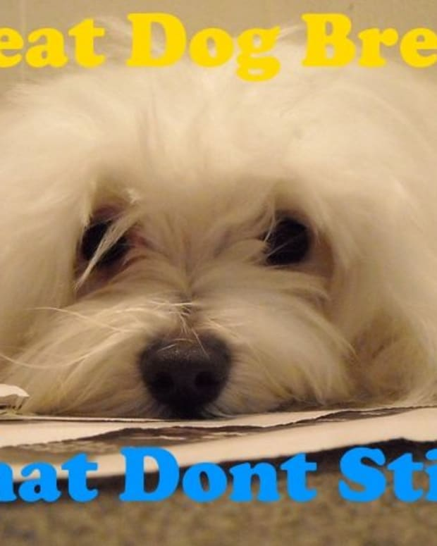 dog-breeds-dont-stink-much