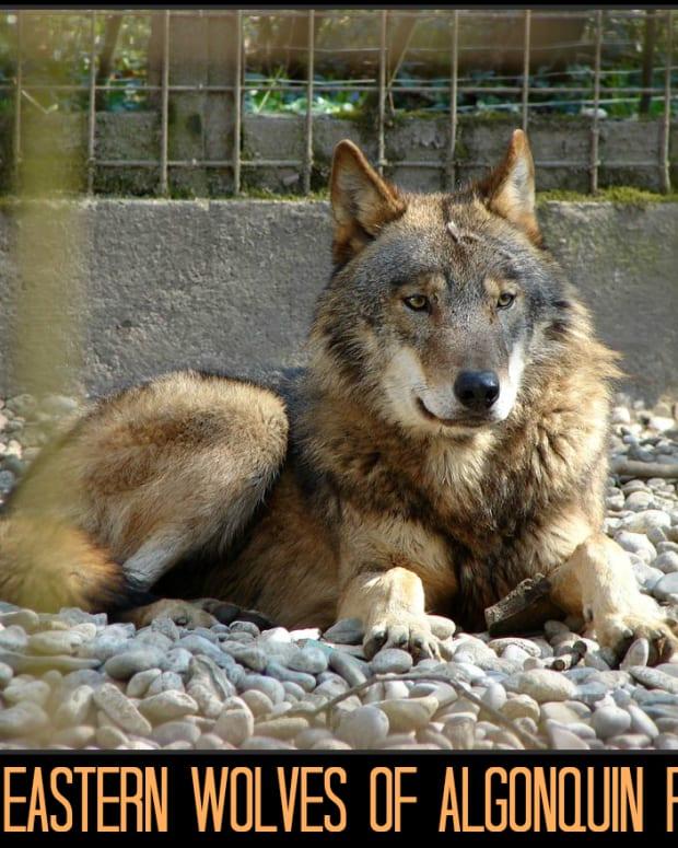 animals-of-algonquin-provincial-park