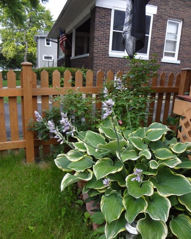 the-gardening-gal-garden-spotlight-hostas-workhorses-of-the-shade-garden