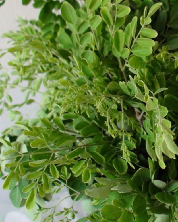 the-health-benefits-of-moringa-malunggay