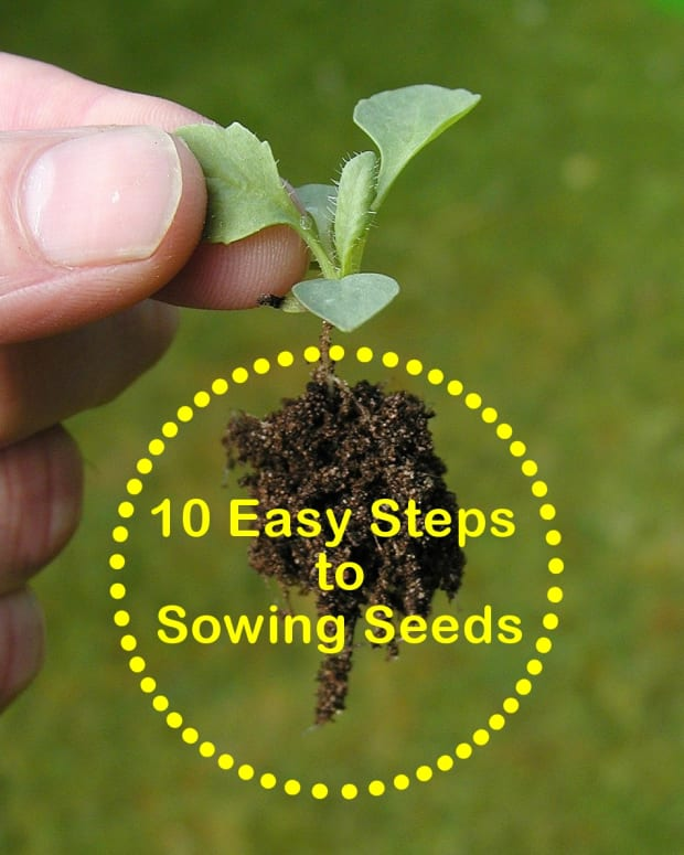 how-to-sow-seeds