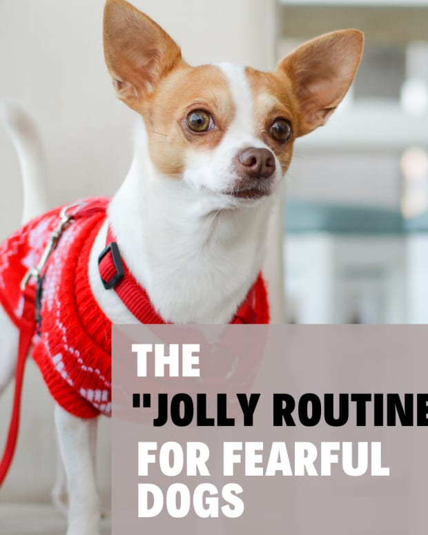 using-the-jolly-routine-for-fearful-dogs