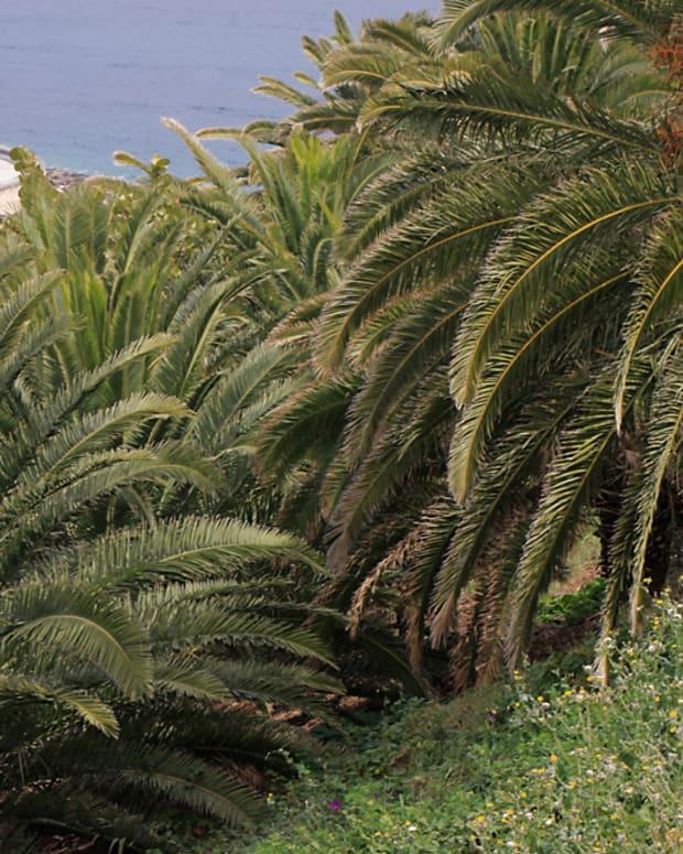 santa-cruz-palmetum