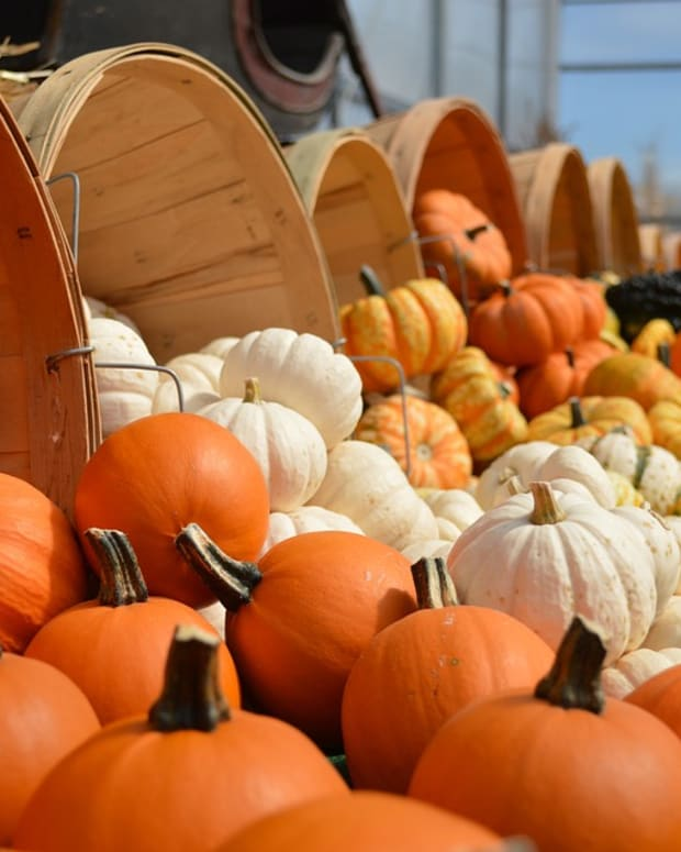 a-guide-to-growing-pumpkins