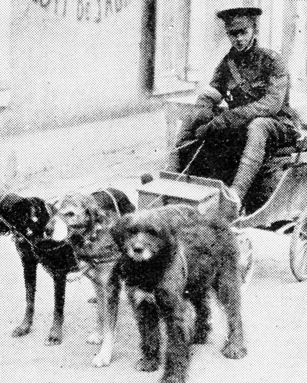 war-dogs-of-wwi-first-great-european-war-world-war-one-1914-1918