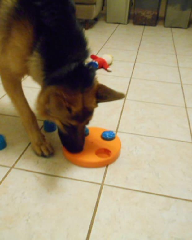 understanding-dog-foraging-behavior