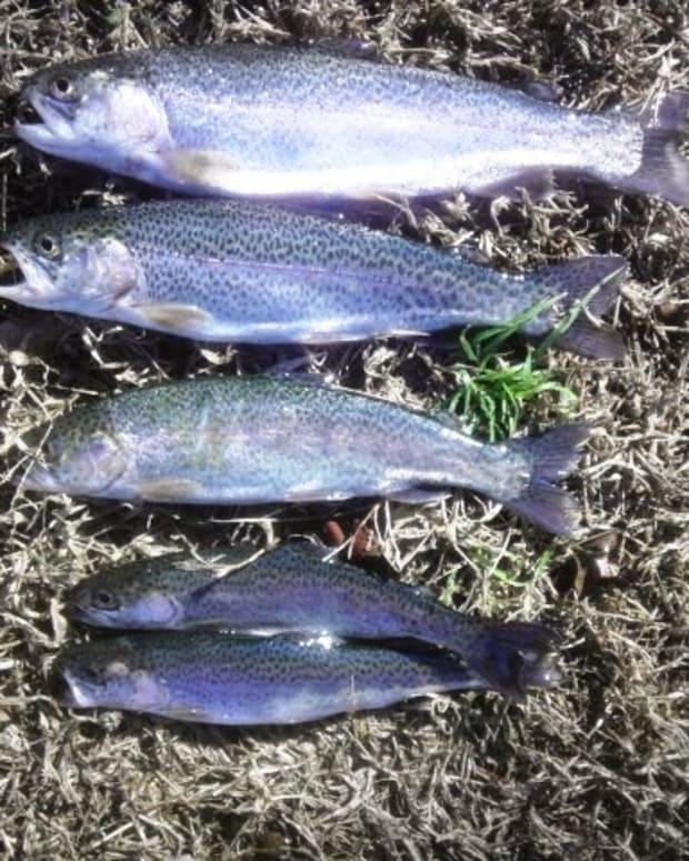 powerbait-fishing-rigs-rainbow-trout