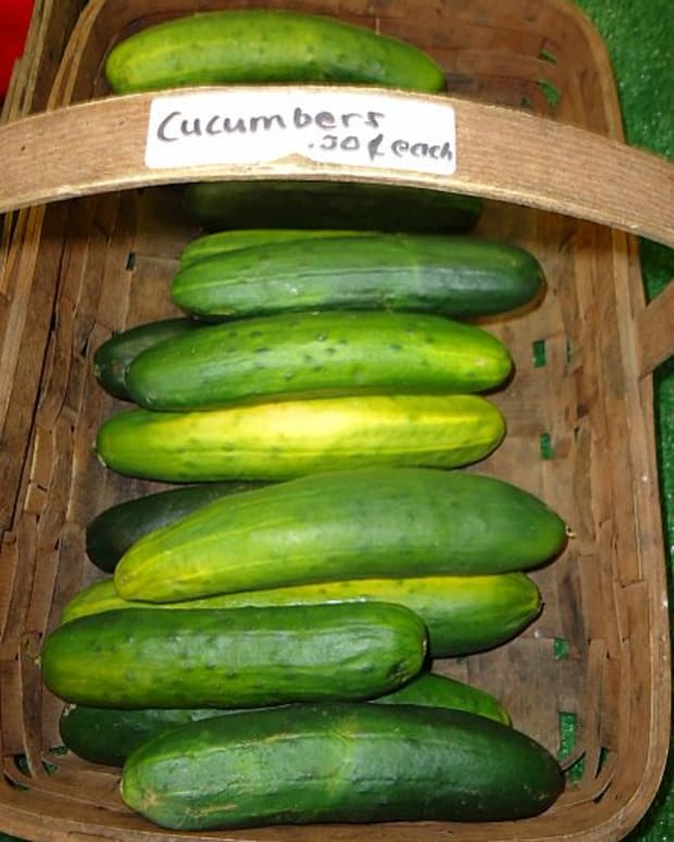 a-guide-to-growing-cucumbers