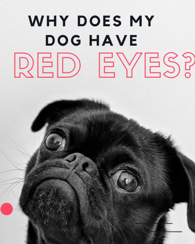 red-eyes-in-your-dog