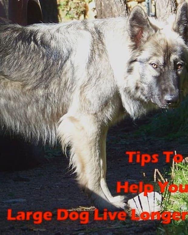 large-dog-breeds-long-lifespans