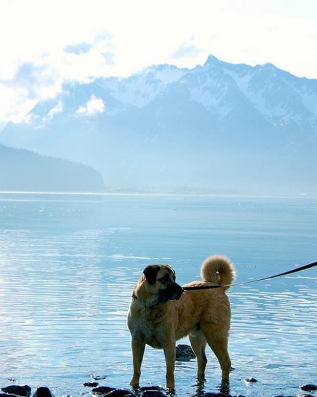 anatolian-shepherd-dog-names