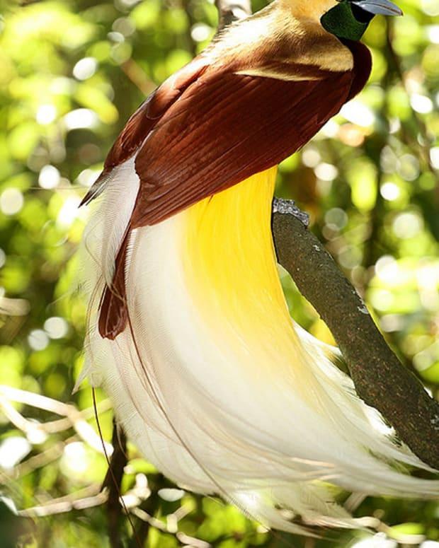 colourful--birds-of-paradise