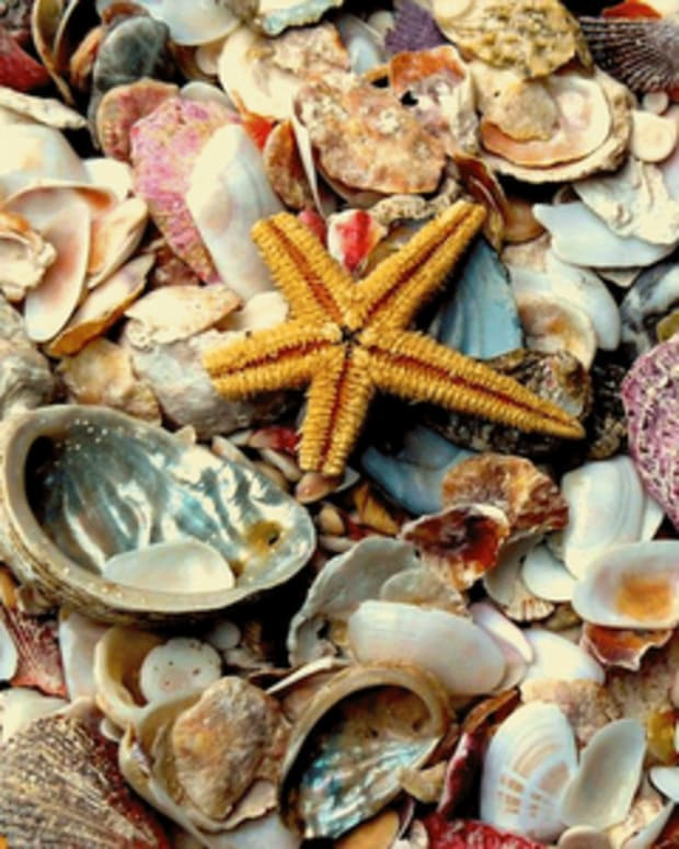 super-simple-diy-seashell-crafts
