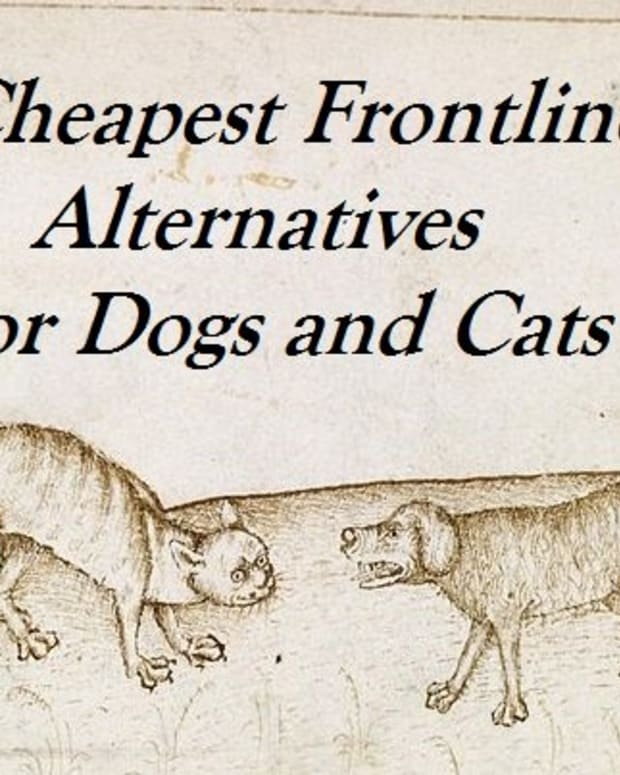 good-generic-alternatives-to-frontline-flea-medication-for-pets