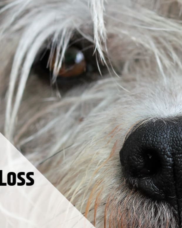 causes-and-treatment-of-hair-loss-in-dogs