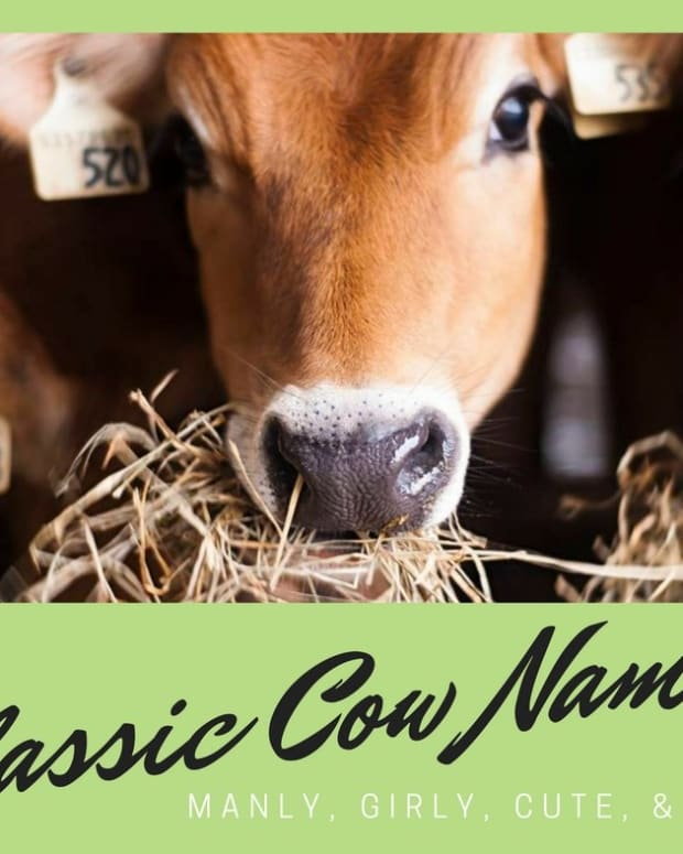 cow-names