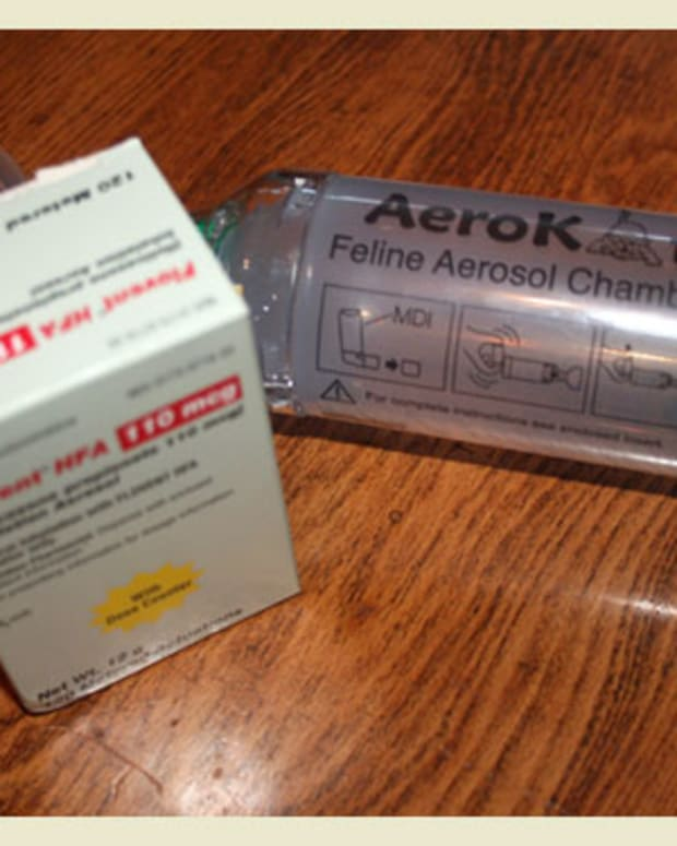 cats-with-asthma-the-aerokat-feline-aerosol-chamber