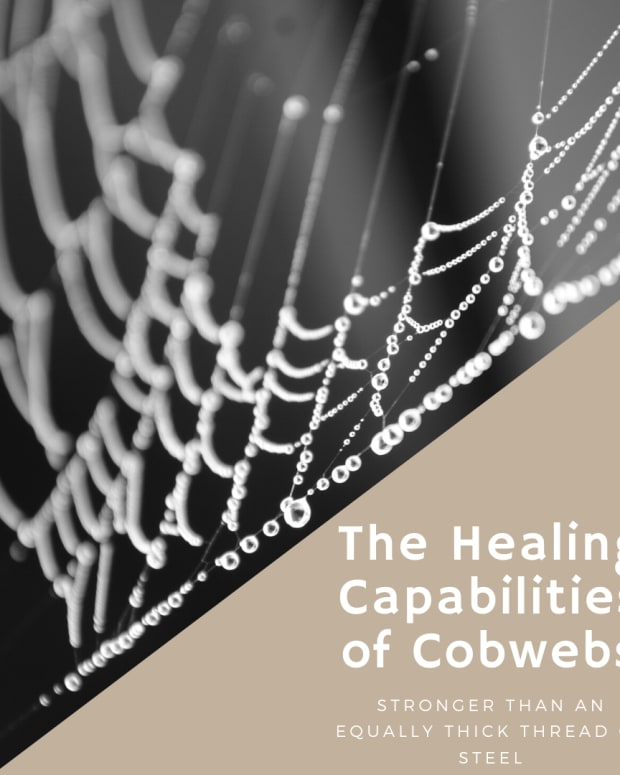 organic-healing-treating-bleeding-wounds-with-cobwebs
