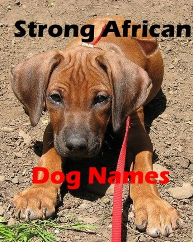 african-dog-names