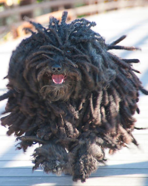 hungarian-dog-breeds