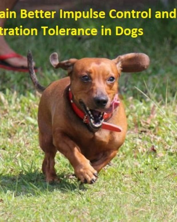 understanding-dog-frustration-tolerance
