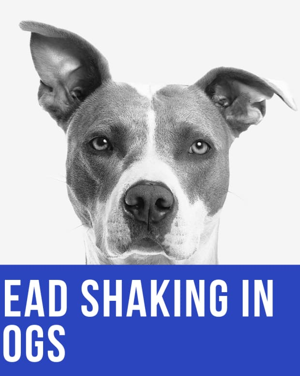 dog-shaking-head