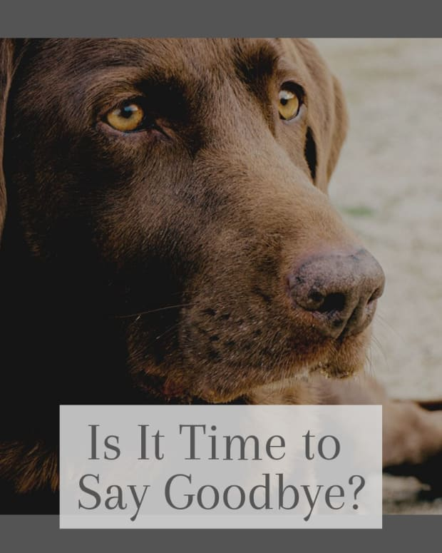 saying-goodbyeforever-how-do-i-know-if-it-is-time-to-euthanize-my-dog