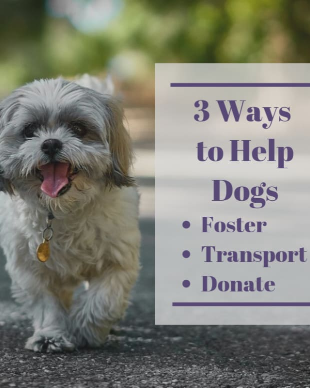 3-ways-to-fill-your-doggie-karma-bank